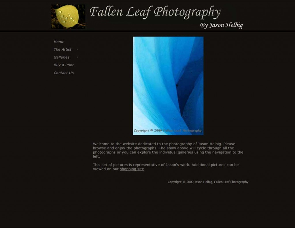 Fallen Leaf Photography Version 1